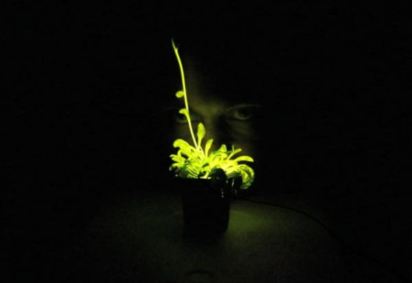 「奇酷」glowing plant,ks开卖发光植物